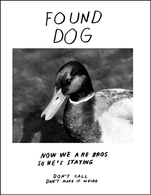 lost-dog