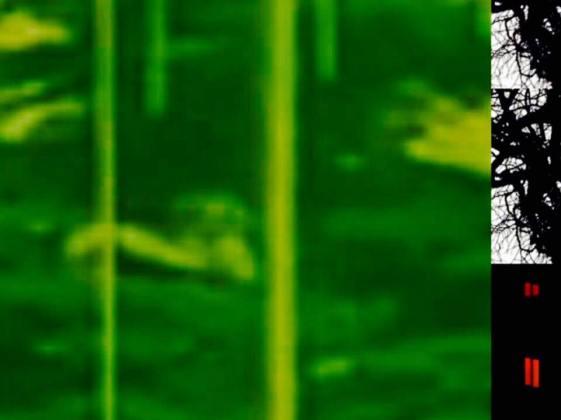 It's A Jungle In Here, 2011
